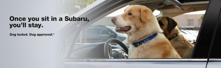 Dog Friend Subaru Outback