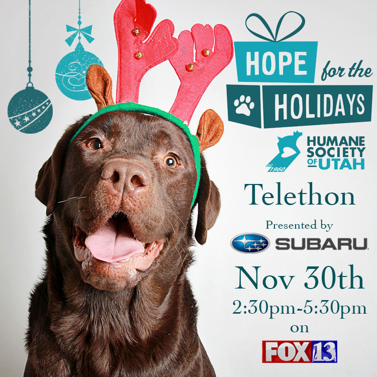 Hope for the Holidays by Subary Chocolate Lab